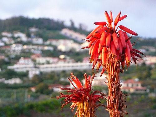 Vivere a Madeira, Portogallo