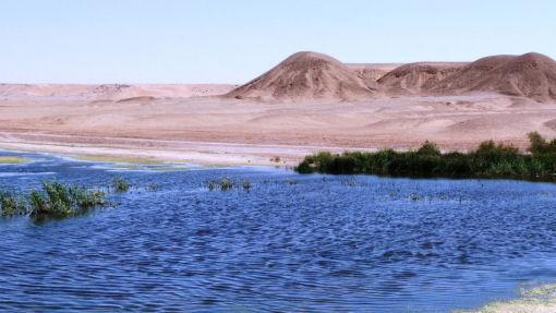 deserto algeria - oasi