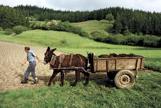 agricoltore imprenditore agricolo