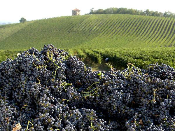 vigne imprenditore agricolo