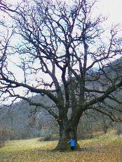 Natura e piante alberi