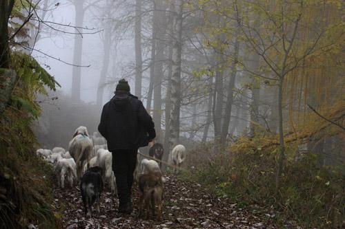 Andrea Maffeo: vita da pastore