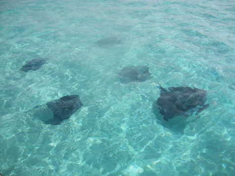 Mare delle Cayman isole cayman