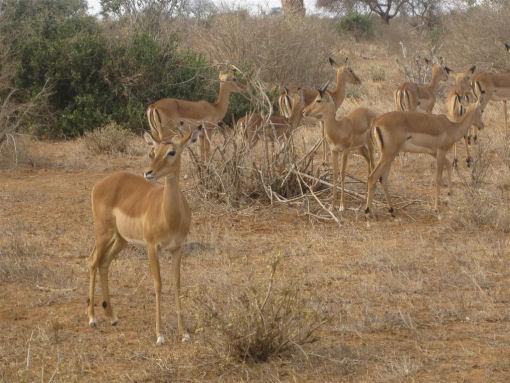 Magico Kenya