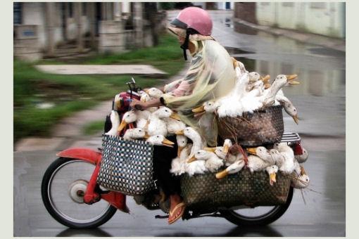 sud est asiatico moto