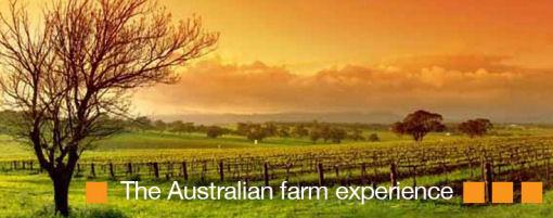 Raccogliere frutta in Australia fattoria