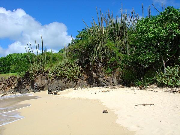 spiaggia martinica piccole antille
