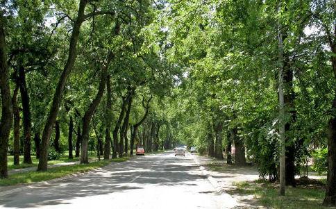 viali alberati a Sombor serbia