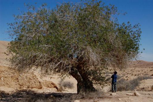coltivare nel deserto