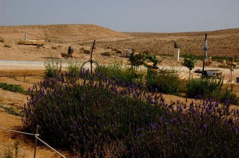coltivazioni nel deserto israeliano