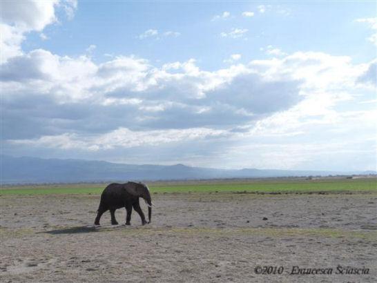 Francesca Sciascia, Malindi kenya