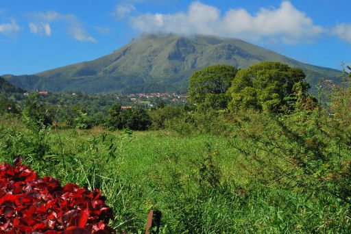Martinica natura