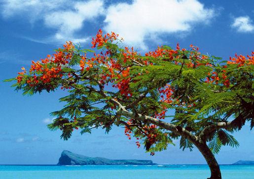 paradisi ai tropici fuggire