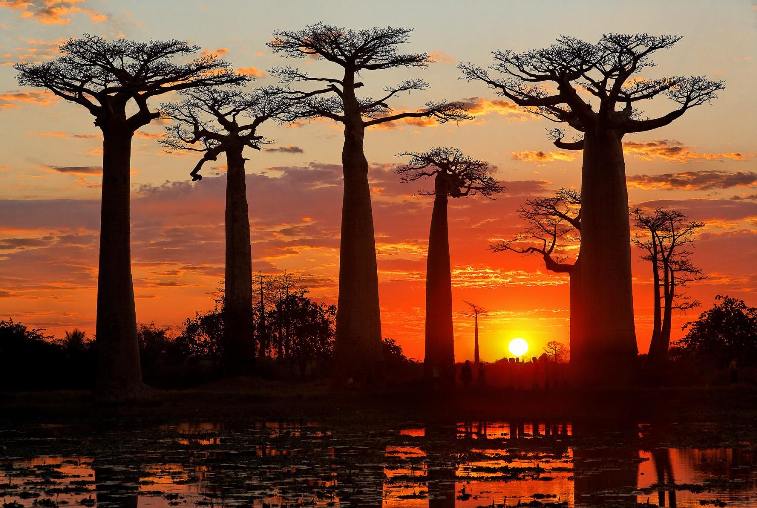 alberi libri Madagascar