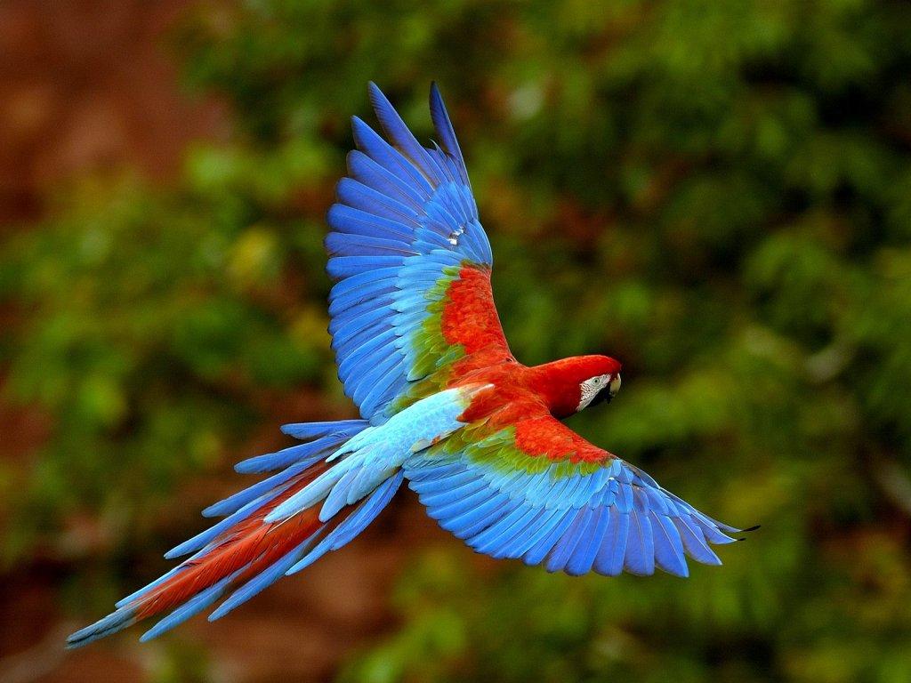 andare e vivere e lavorare in Brasile Amazzonia