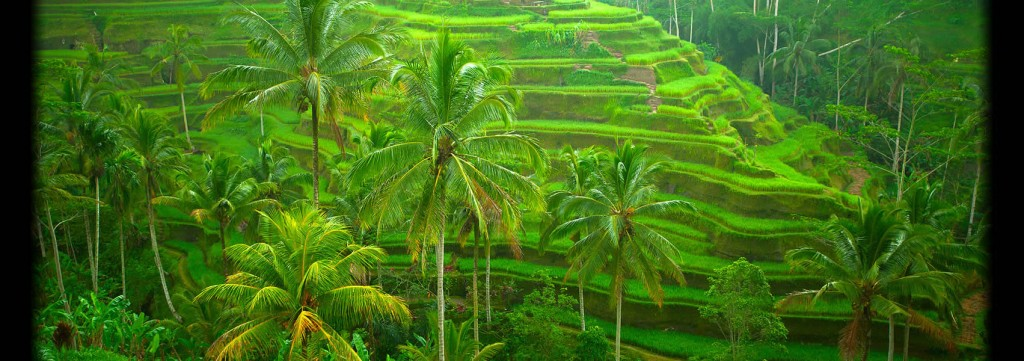 Una nuova vita a Bali