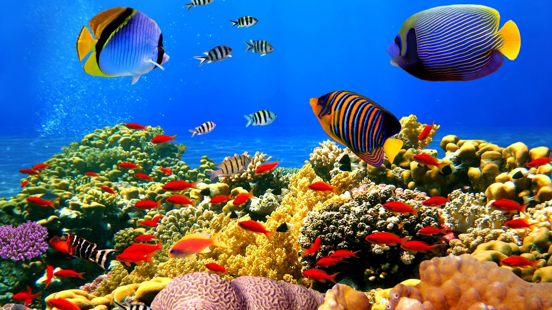barriera corallina a rischio