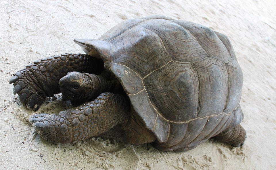 tartarughe alle seychelles