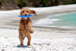 spiagge per cani in spagna