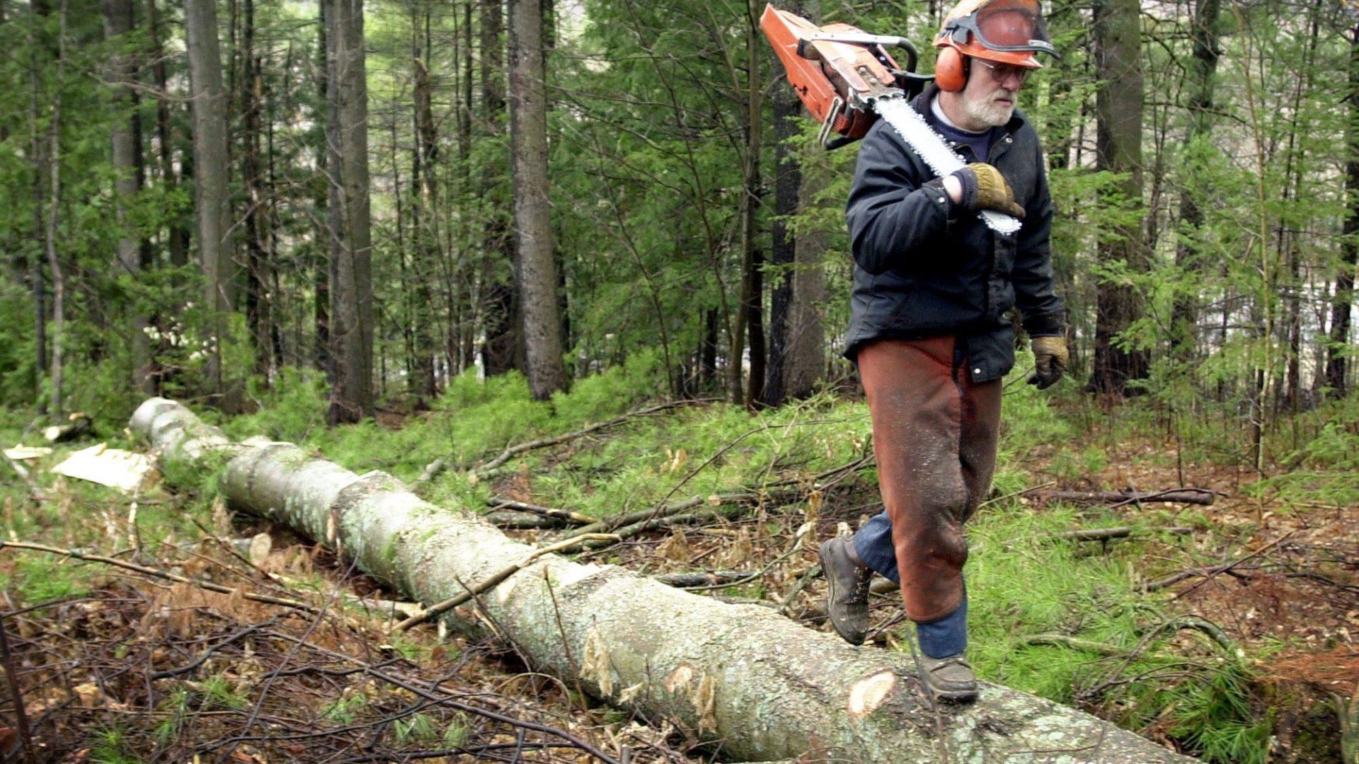 fare il boscaiolo