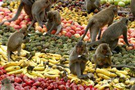 Monkey Buffet Festival, in Thailandia