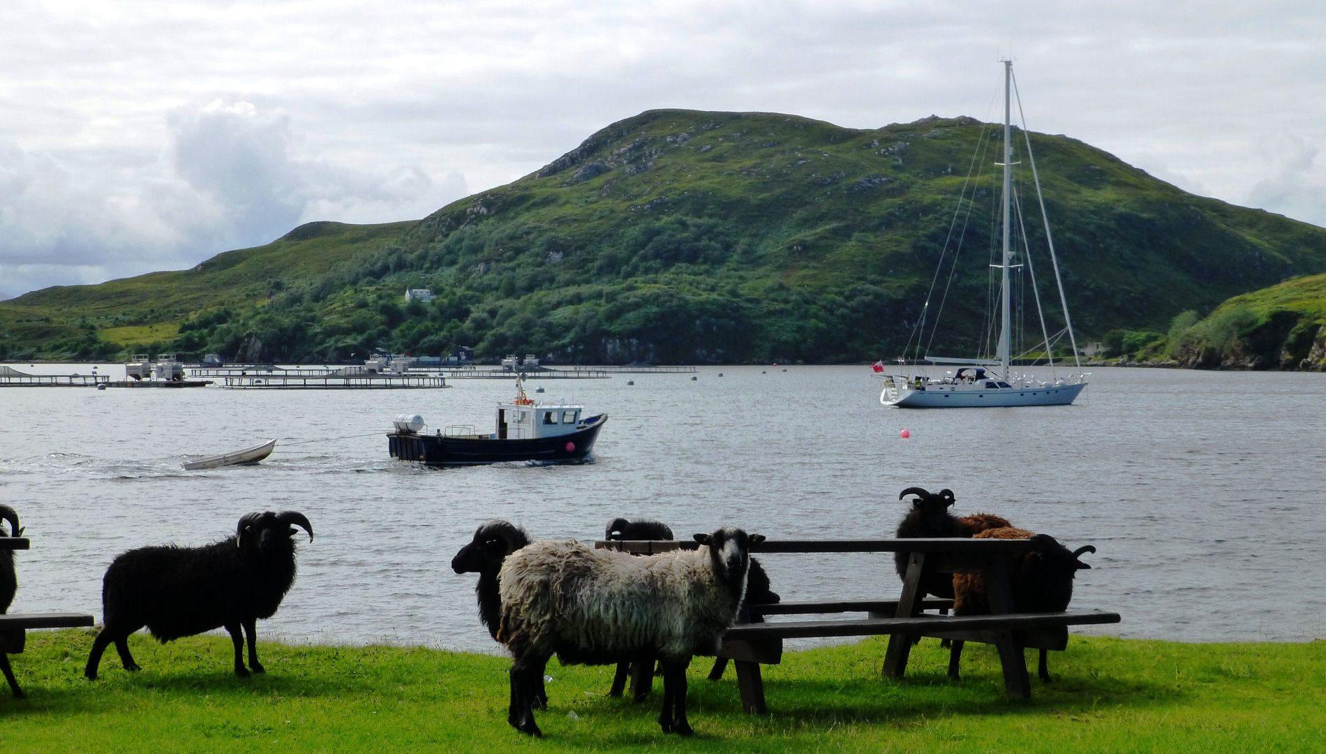 Vendesi isola in Scozia, completa di scuola ed ufficio postale