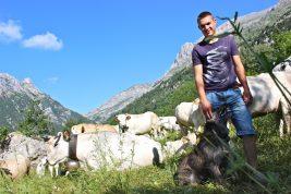 Cercasi volontari sulle Alpi Orobie per vivere un'estate da pastori