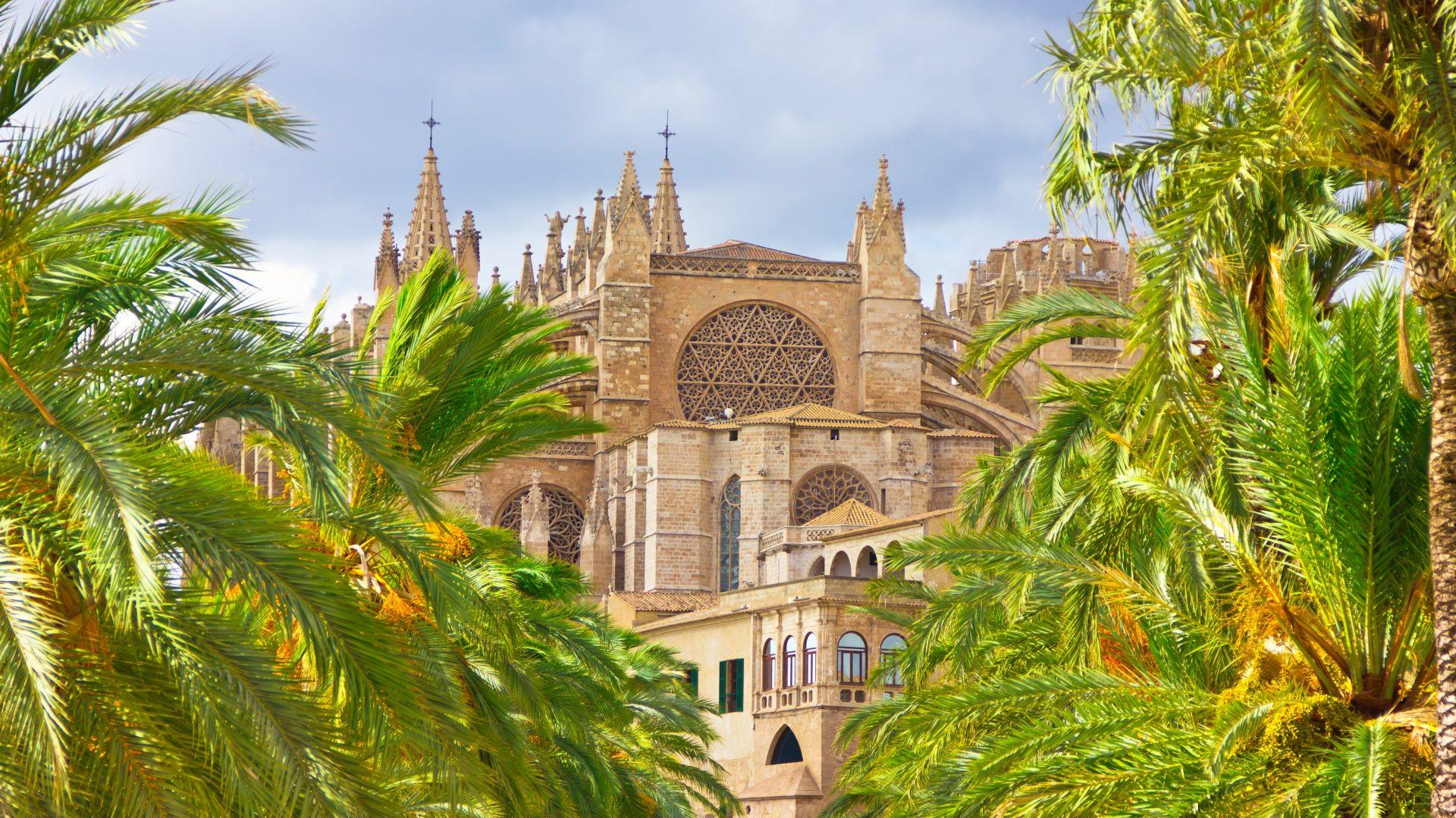Ambiente a palma di maiorca la prima cattedrale a impatto for Palma pianta