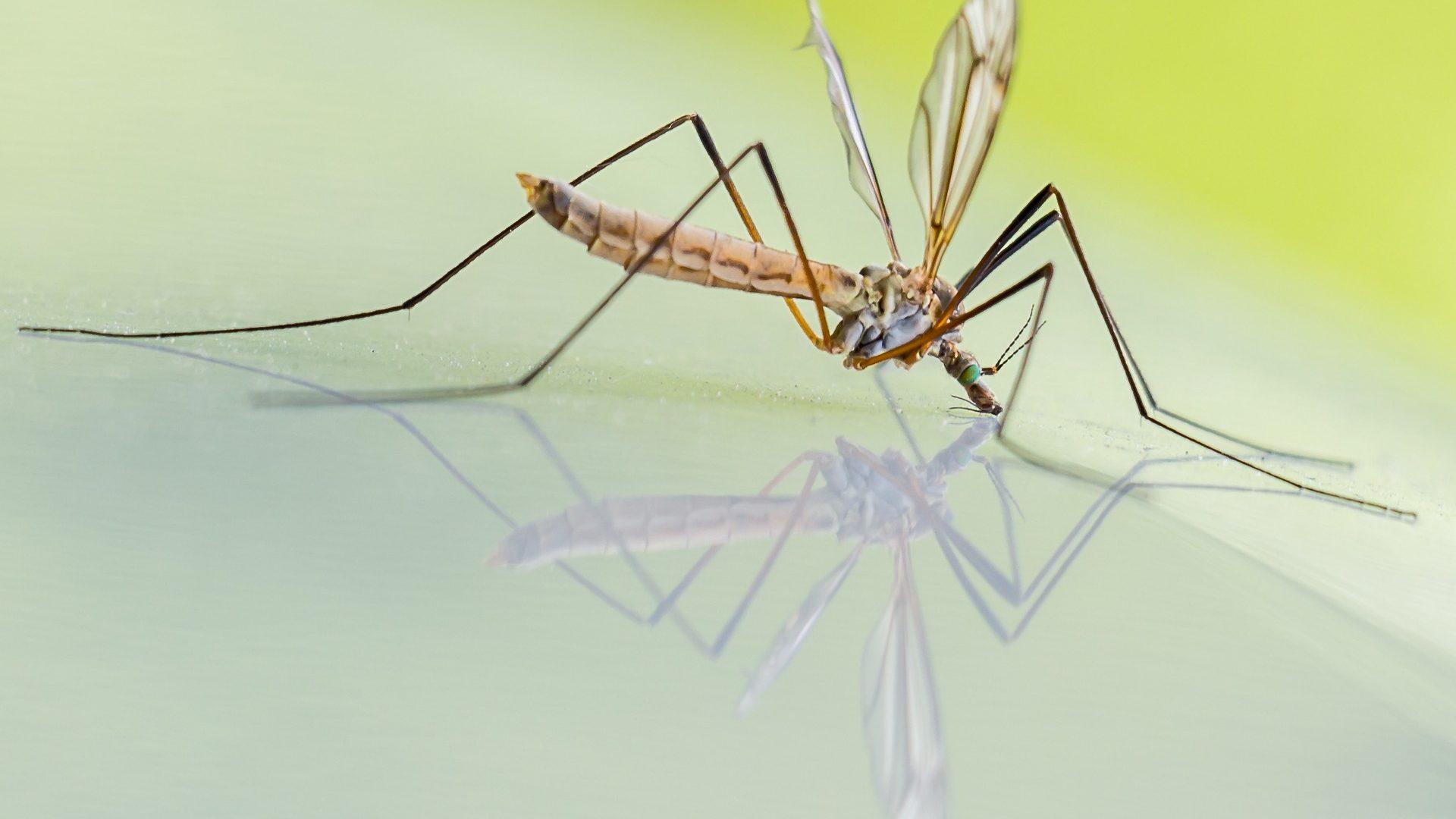 Malattie trasmesse delle zanzare: la mappa mondiale delle zone più pericolose