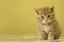 coccolare gatti per lavoro