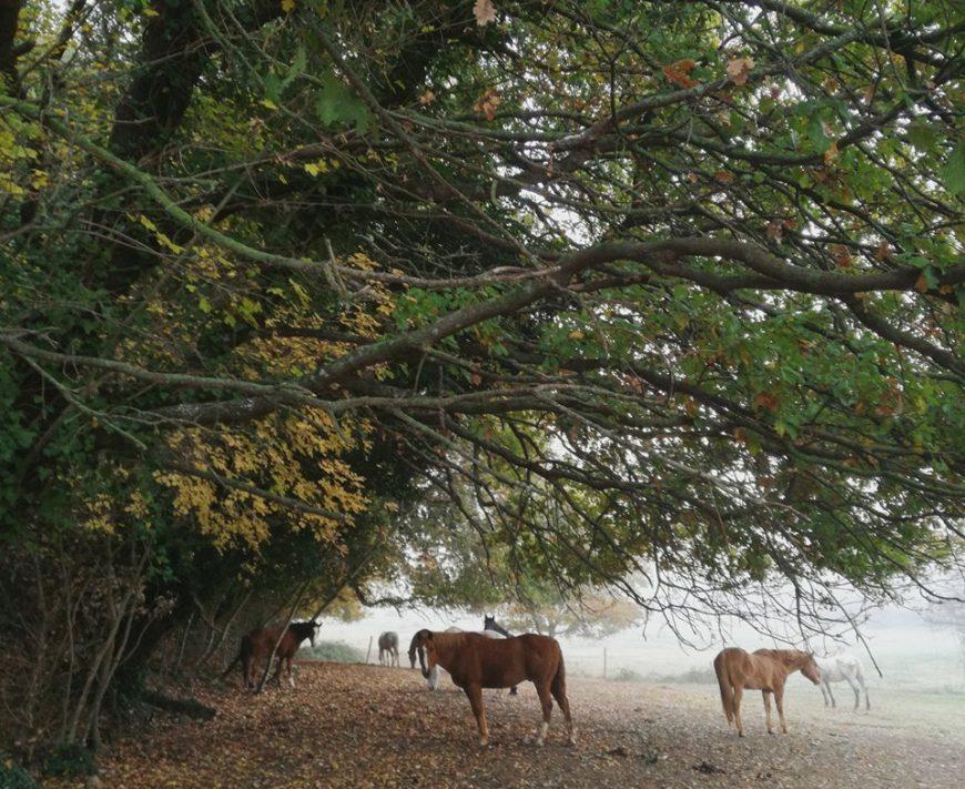 Prendersi cura dei cavalli maltrattati