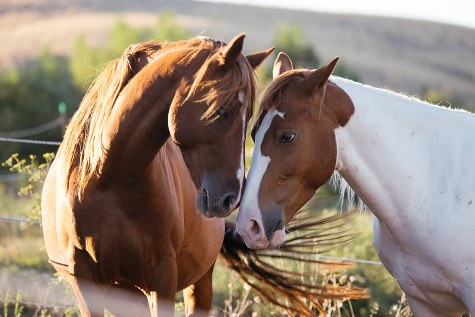 Italian Horse Protection: così ridiamo vita ai cavalli abusati e maltrattati