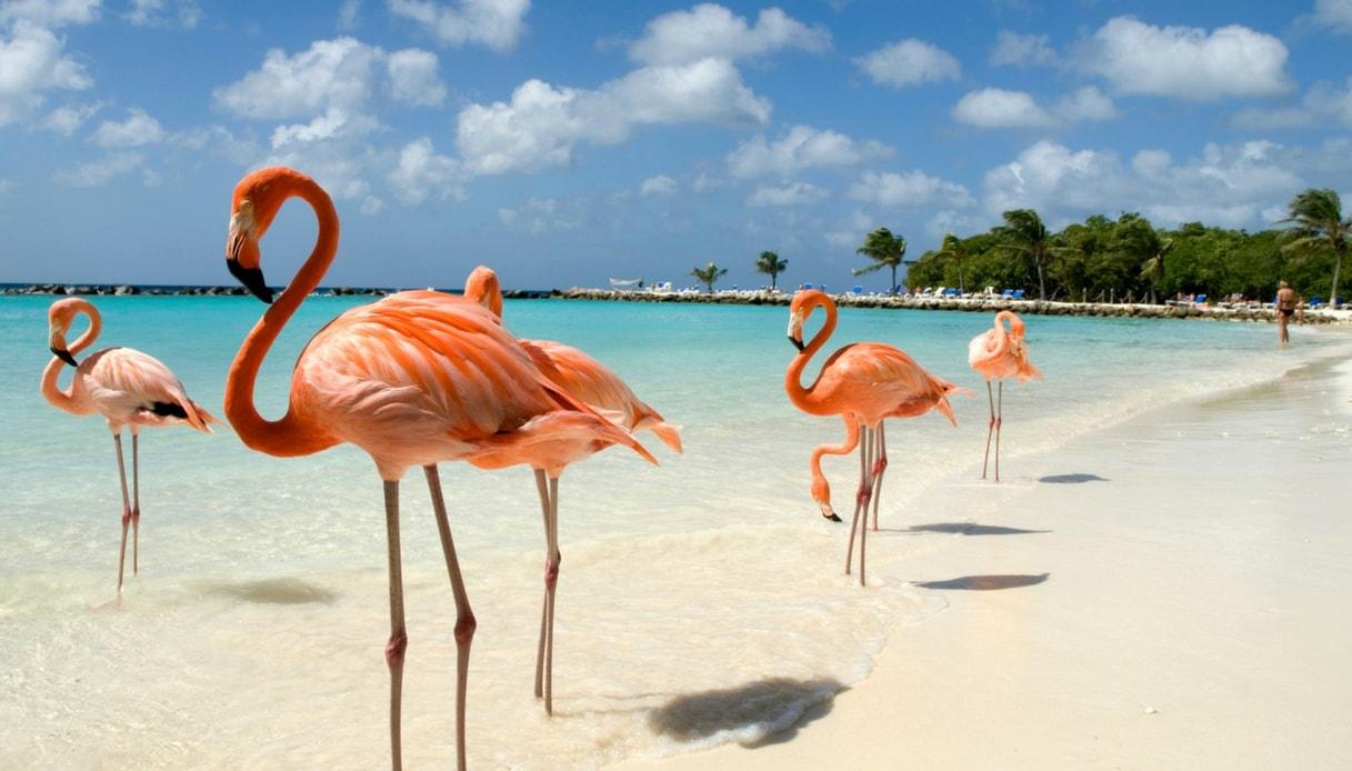 Guardiano di fenicotteri alle Bahamas