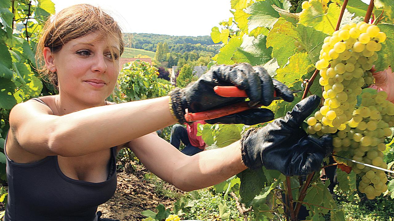 Opportunità lavorative in agricoltura all'estero