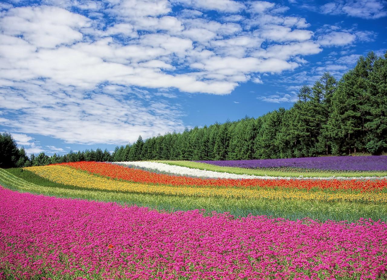 Primavera in Giappone, un'esperienza da sogno