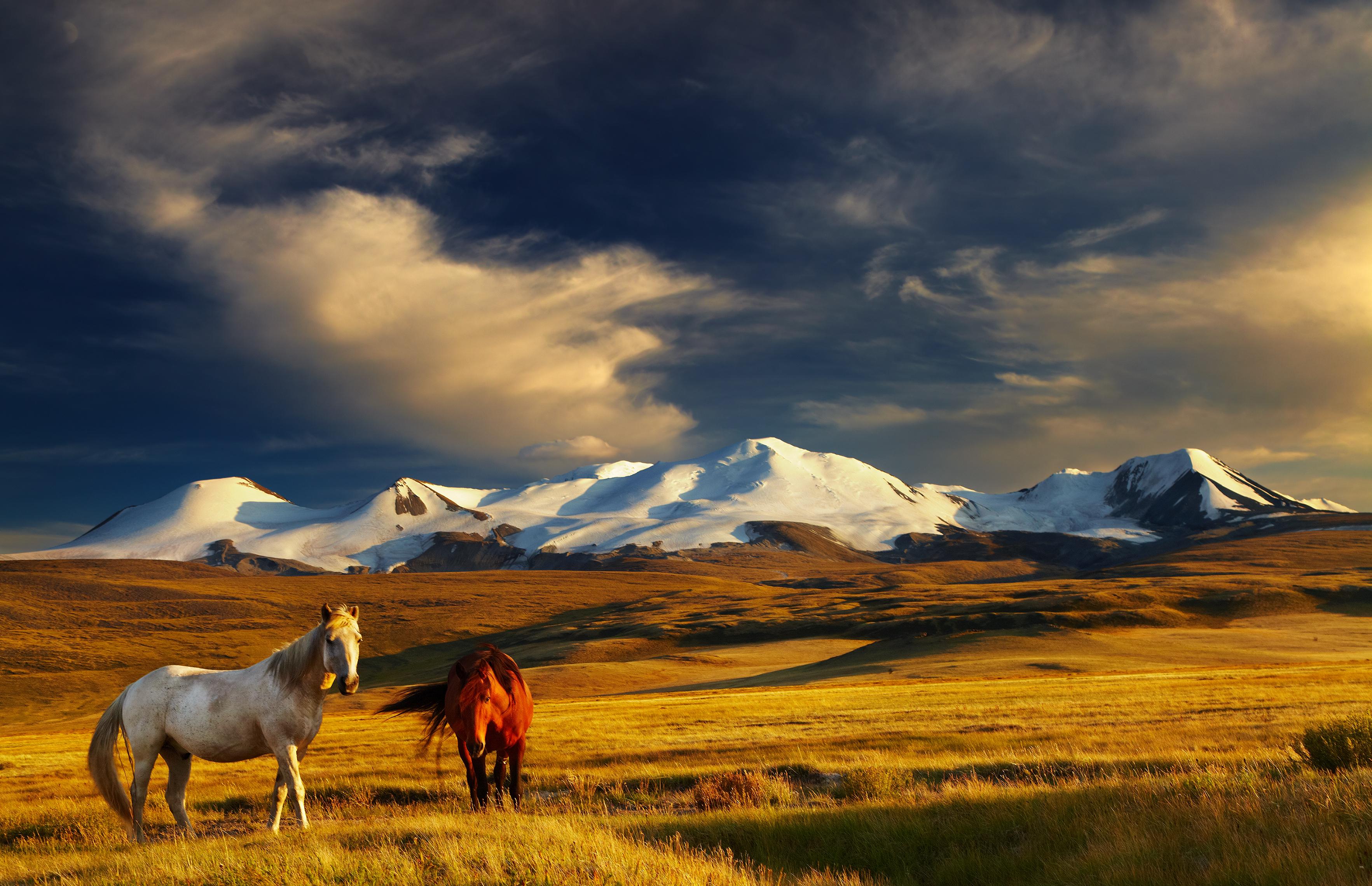 https://www.voglioviverecosi.com/alfredo-savino-vivere-e-lavorare-in-mongolia.html