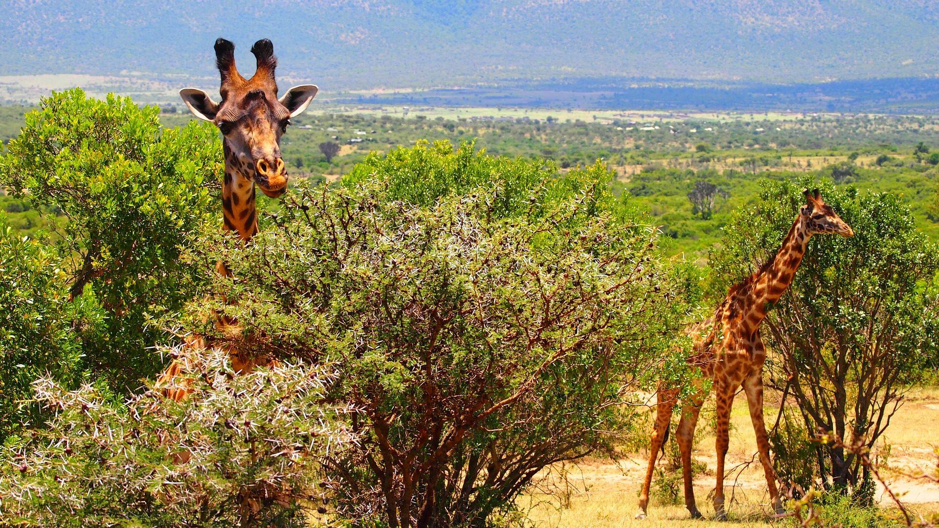 Cambio vita e vado a vivere in Kenya