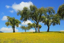 Il sughero: l'oro verde del Portogallo