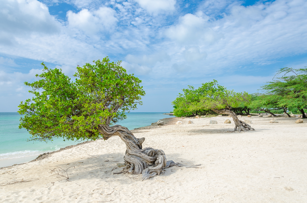 Eagle Beach Palm, Aruba - spiagge più belle al mondo