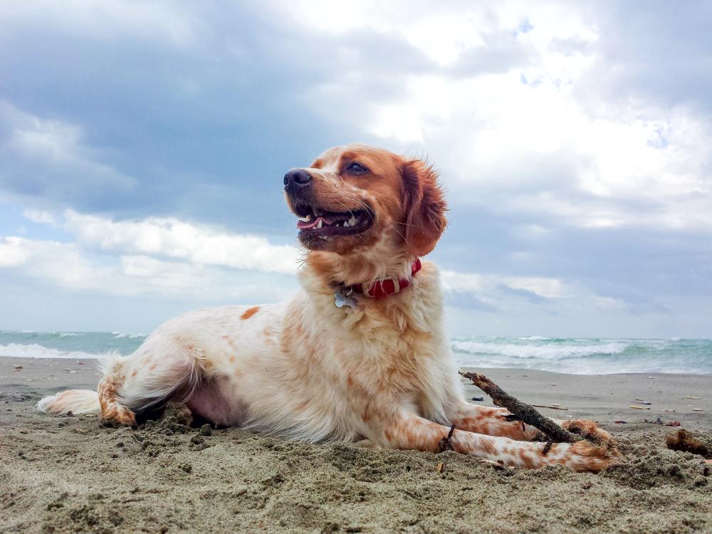 e 10 migliori spiagge per cani in Spagna