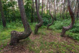 La foresta di Gryfino polonia