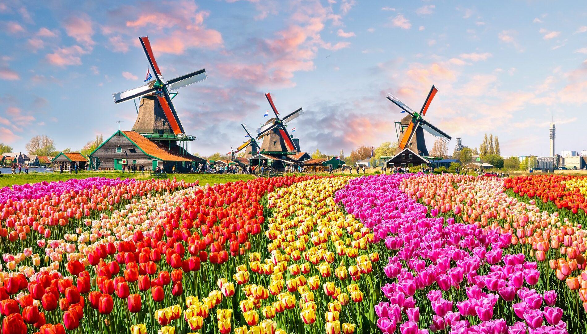 Vendita Case In Olanda la guida n°1 per andare a vivere in olanda【2020】