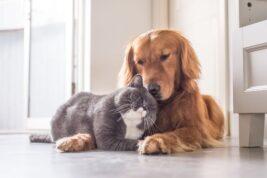LAVORO CON ANIMALI