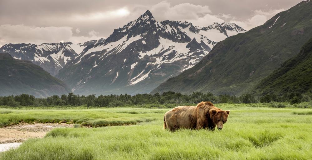 PAESAGGI ALASKA