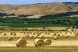 lavorare in fattoria in Nuova Zelanda