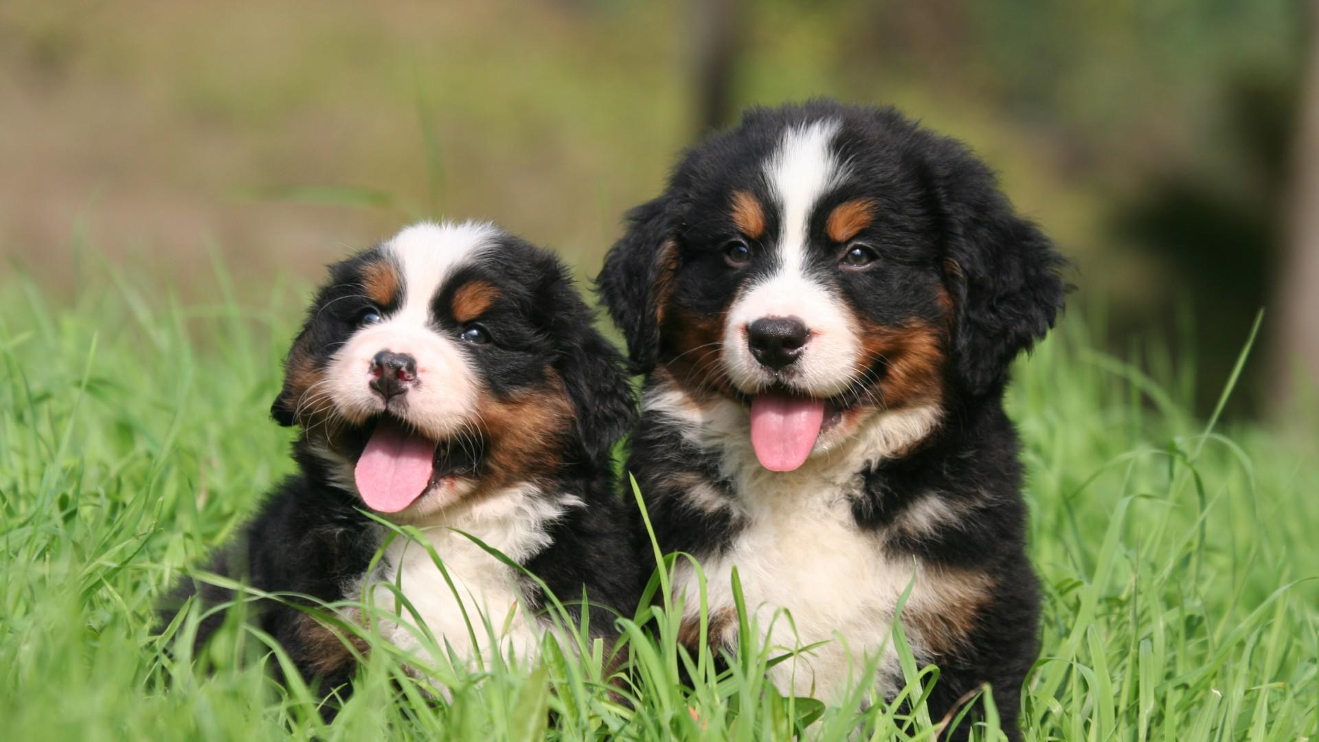 allevare cani