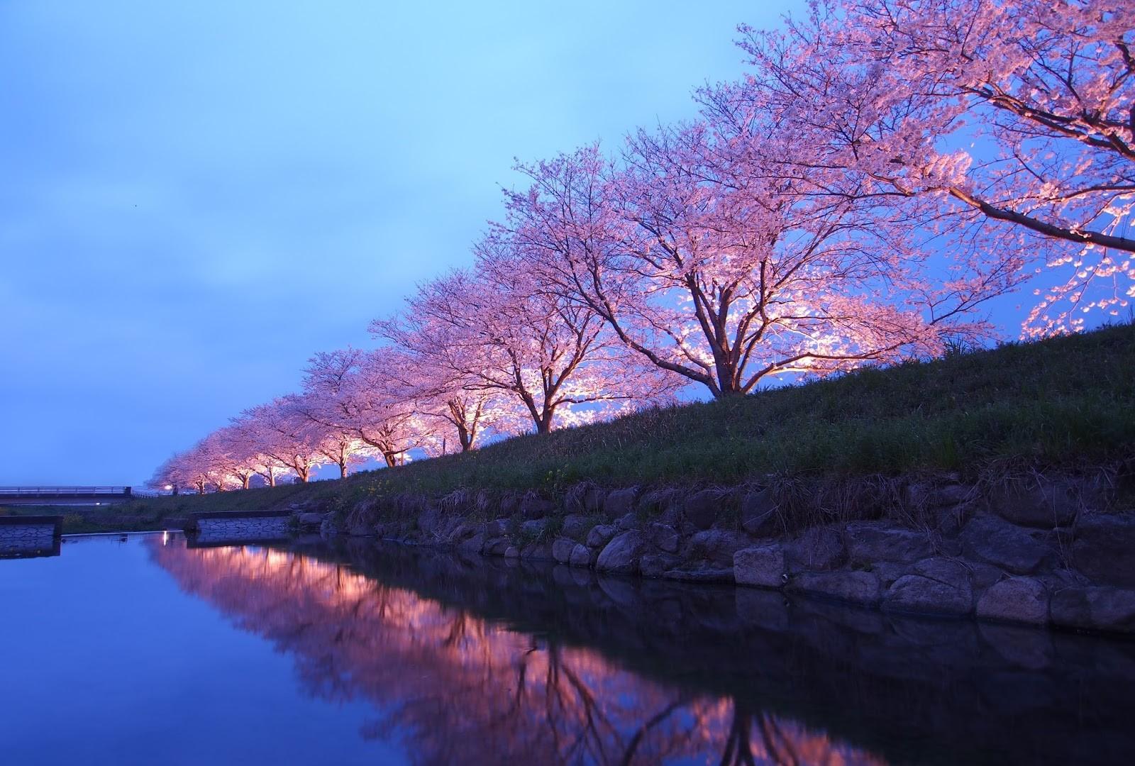 trasferirsi a vivere e lavorare in Giappone