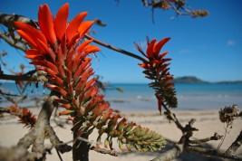 trasferirsi in Madagascar Nosy Be