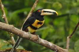 trasferirsi in Ecuador
