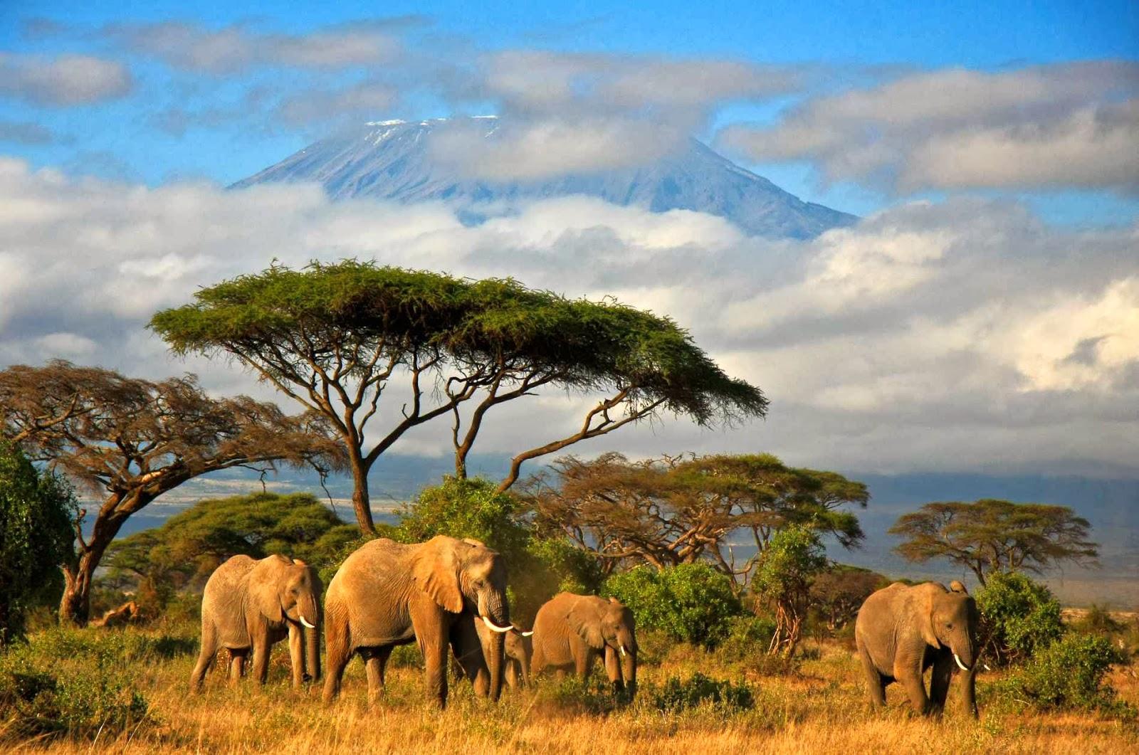 trasferirsi in Africa